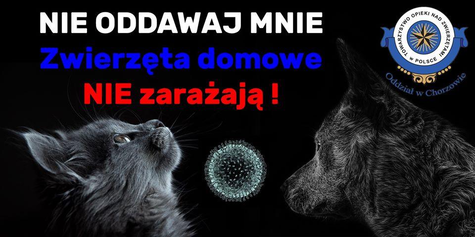 Koronawirus-zwierzęta domowe niezarażają!