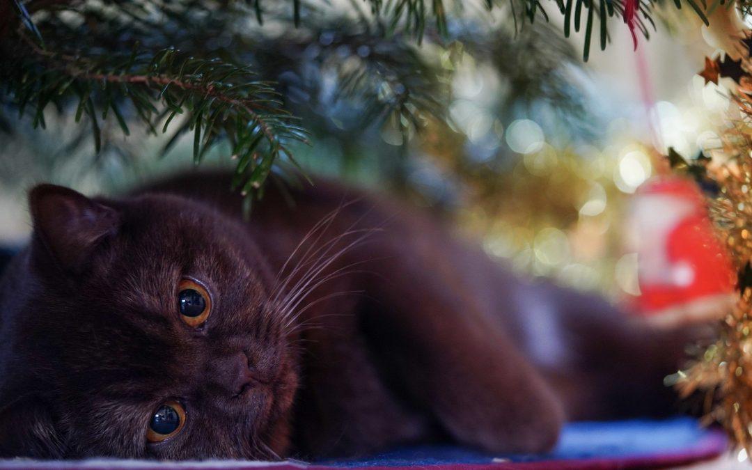 Godziny otwarcia Lecznicy wokresie Świąt Bożego Narodzenia