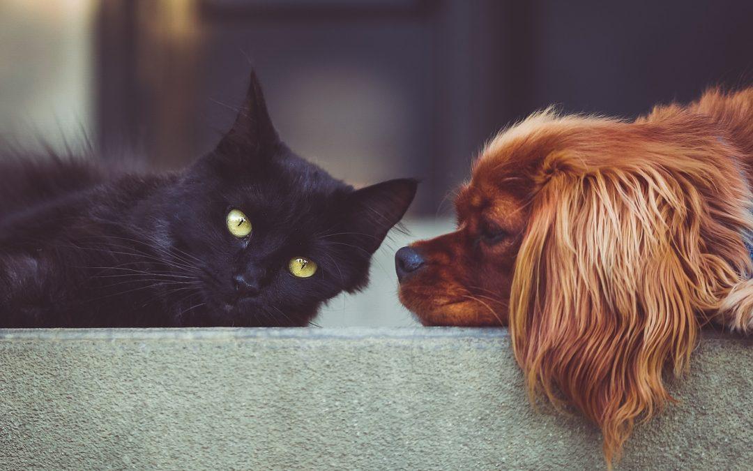 Dofinansowanie sterylizacji ikastracji psów ikotów wOstródzie