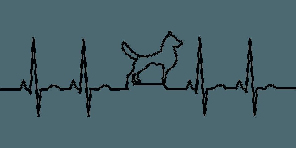 Konsultacje kardiologiczne-styczeń 2020